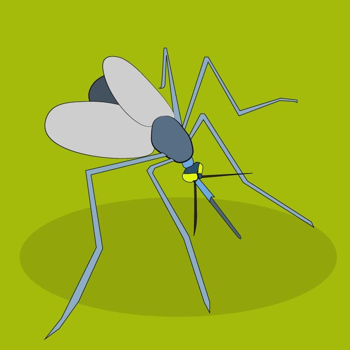 Mosquito illustration by Kaelen Felix for 360 MAGAZINE