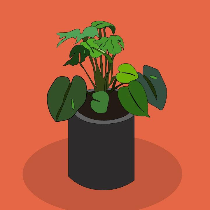 Emotional Support House Plants illustration by Kaelen Felix for 360 MAGAZINE