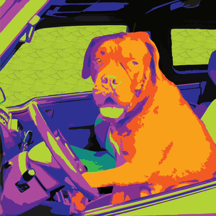 Dog Driving illustration by Heather Skovlund (Original Photo Credit: Pixabay) for 360 Magazine