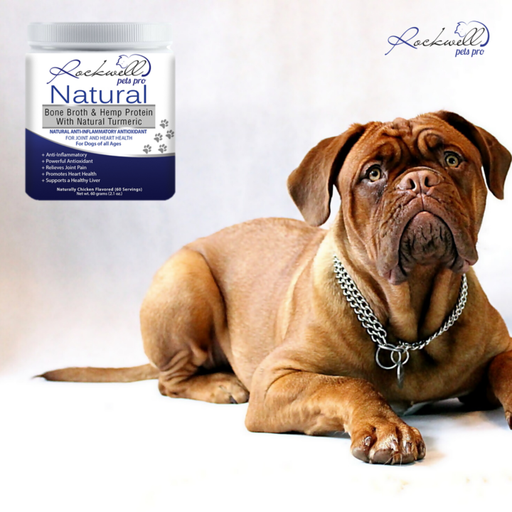 Rockwell Pets Pro Natural Dog Bone Broth via Maggie Douglas at Everything Branding for use by 360 Magazine