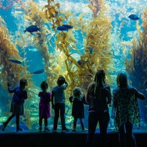 by Birch Aquarium for use by 360 Magazine