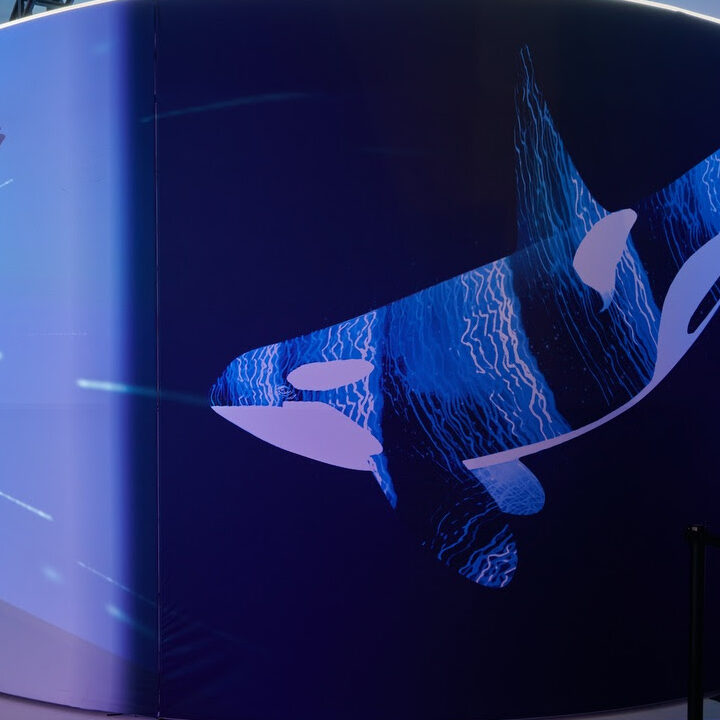 Immersive whale experience from Sarah Bronilla from Tribeca Immersive for use by 360 Magazine